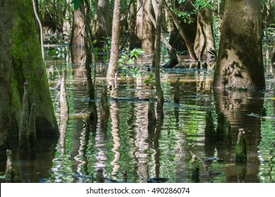 Tree trunk reflections and leaves in swamp water