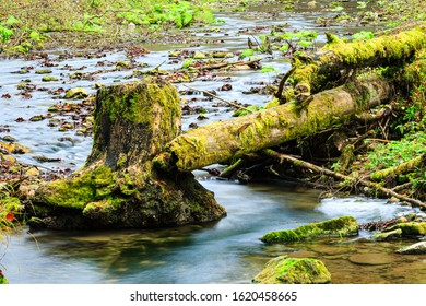 Tree trunk in a river, autumn