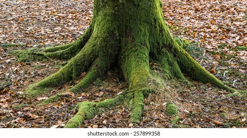 Tree trunk with roots covered in moss