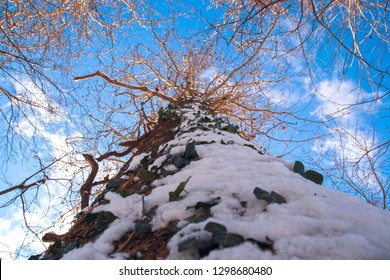 Tree Trunk and Snow