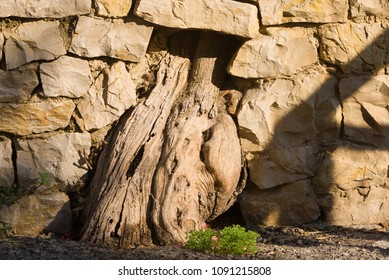 A tree trunk stretches through an opening in a stone wall in Deia, Mallorca, Spain.