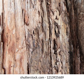 Tree trunk stripped of bark background