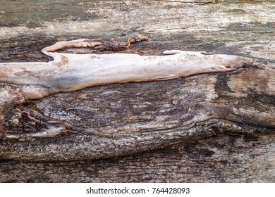 tree trunk with a structure like an animal