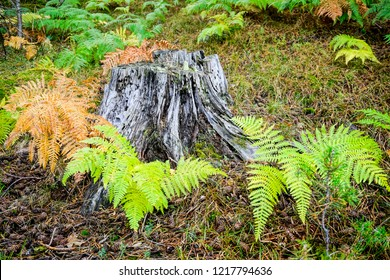tree trunk surrounded by ferns