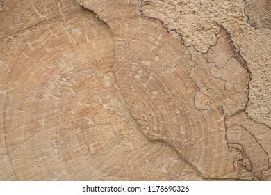 Tree trunk texture.