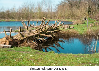 tree trunk with twigs over water in Oisterwijk, The Netherlands