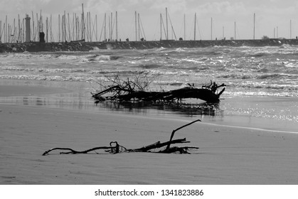 tree trunk washed on beach in Versilia coastline. A pier in the background