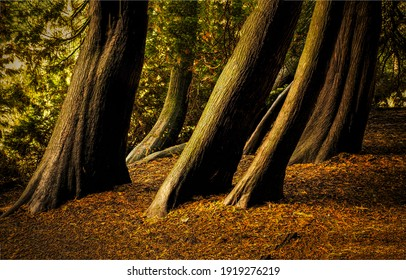Tree trunks in autumn forest. Tree trunks. Tree trunks view. Tree trunks in forest fall