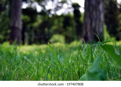 Tree trunks background with detailed grass