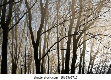 Tree trunks and bare branches as silhouettes in hazy morning light in a beech forest, abstract nature background, selected focus, narrow depth of field