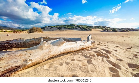 Tree trunks brought from the sea on the beach with sand dunes - Piscinas, Sardinia