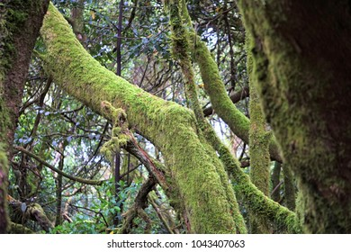 tree trunks are covered with green moss