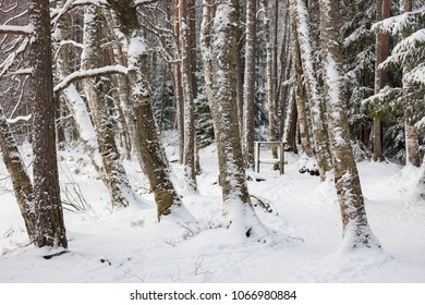 Tree trunks covered in snow at forest