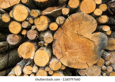 Tree trunks cut and stacked for house fireplace and cooking.