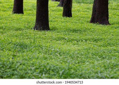 Tree Trunks in a Field With Green Grass