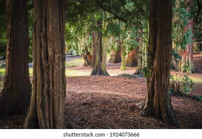 Tree trunks in forest. Forest tree trunks view. Tree trunks. Forest tree trunks