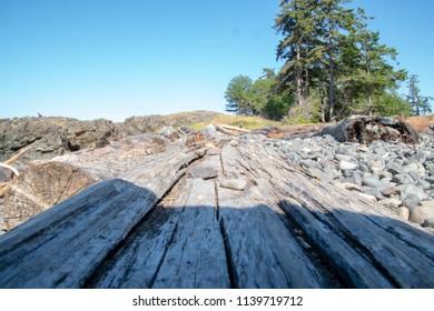 Tree trunks on the beach