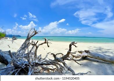 Tree trunks on the beach of Koh Poda, in the Ao Nang bay, Krabi province, Thailand