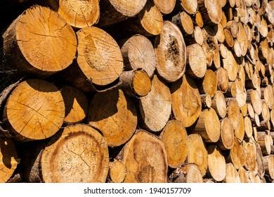 Baumstämme Holzindustrie