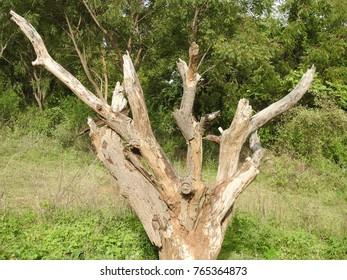 Tree Trunk/Stump, Dead Tree in Green forest