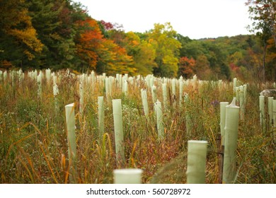 Tree tubes protecting saplings in reforested land in an effort to mitigate the effects of recent construction in the area.