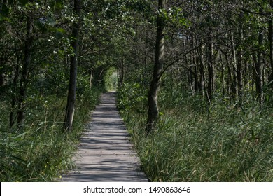 Tree tunnel in forest of Nationalpark at Darss island coastline of baltic sea