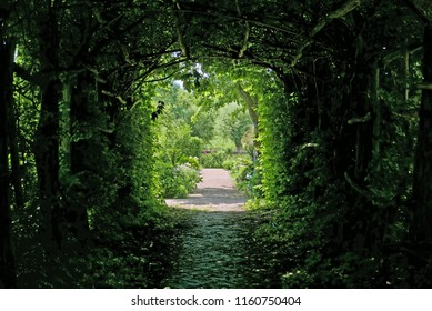 Tree tunnel in a garden in northern Germany