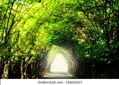 Tree tunnel nature green trail light sun destination success forest