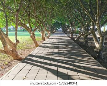 タイの南省の有名な観光地、プルメリアの木々の木のトンネル。