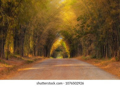 Tree tunnels and sunlight. , Shooting location  in Khao Kor, Thailand