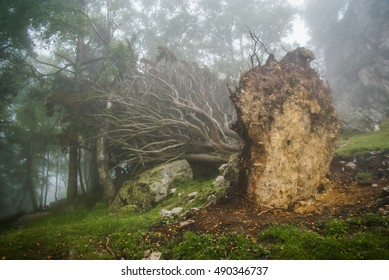 Tree turned out of the ground by storm in Asturias, Spain