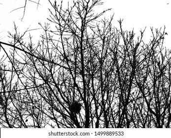 Autumn's tree twigs bough limb white background
