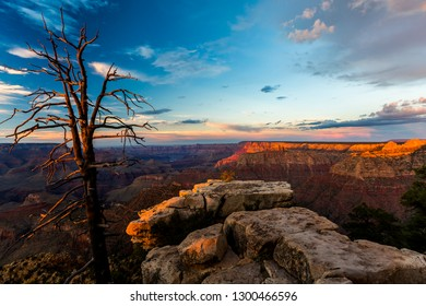 A tree with twisted twigs receives the beautiful sunset lights at Grand Canyon National Park in Arizona, United States