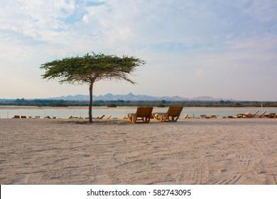 Tree and two deckchairs on Sir Bani Yas island, UAE