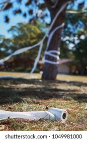 Tree vandalized with toilet paper in a residential yard