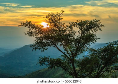 tree view with sunrise over mountain