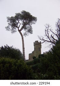 Tree at Warwick Castle