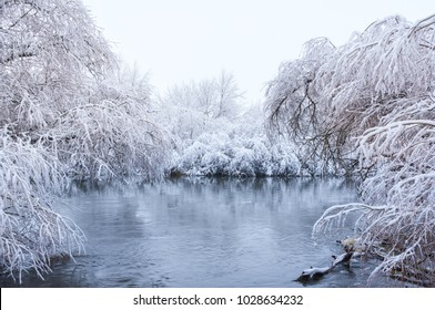 Tree in water covered with snow