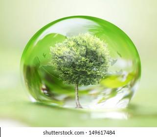 tree in water drop on leaves