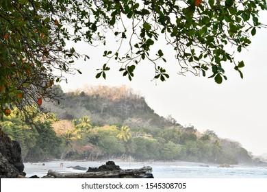 tree in water, photo as a background taken in Nicoya, Costa rica central america , montezuma beach