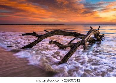 Tree and waves in the Atlantic Ocean at sunrise at Driftwood Beach, Jekyll Island, Georgia.