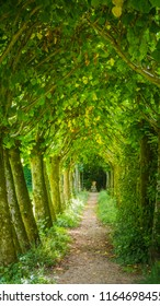 A tree way, corridor of green trees, alley in a beautiful garden / park at Athelhampton (Admiston / Adminston) house, settlement and civil parish in Dorset, England.