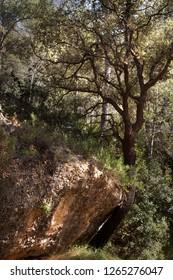 Tree in the way to La Fresneda.Teruel
