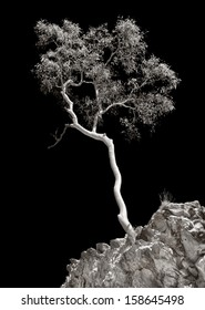 Tree in West Macdonnell ranges