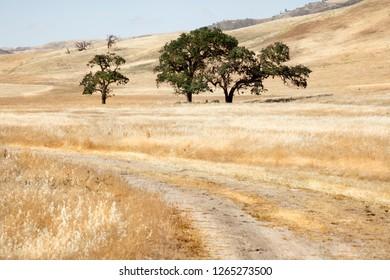 Tree in the western. California