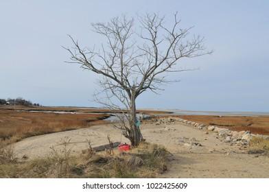 Tree at Wharf Lane, Yarmouthport, MA. USA