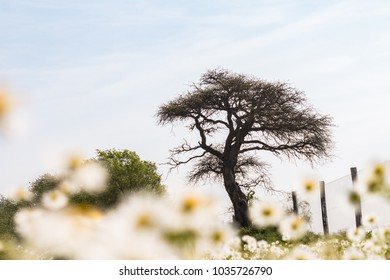 A tree in a white scenario with yellow flowers