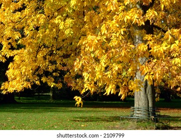 A tree whose leaves have turned yellow