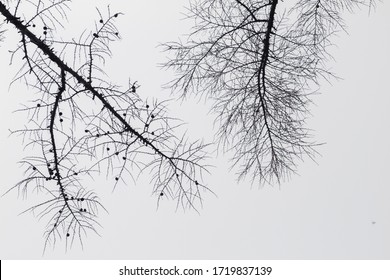 Tree in winter against the sky view from the bottom up black and white background