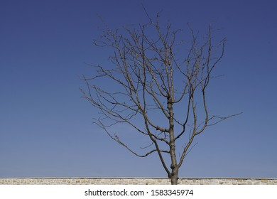 tree in winter with blue sky
